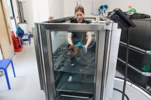 Vets hydrotherapy
